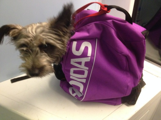 Badger travels in a backpack when we go by train